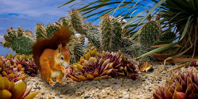 Nature, Animal, Squirrel, Mouse, Cactus, Possierlich