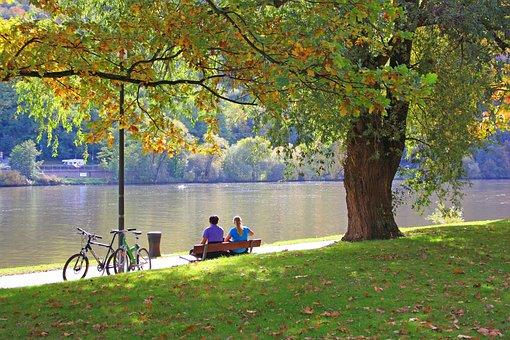 Tree, Nature, Park, Leaf, Autumn, Waters, Idyllic