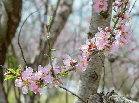 Flower, Tree, Branch, Flora, Nature, Garden, Springtime