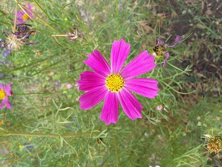 Flower, March 8, Summer, Nature, Plant, Grass