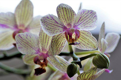 Orchidea, Exotic Flower, Flower, Plant, Yellow Flower