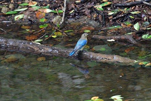 Natural, Bird, Waters, Outdoors, Wild Animals