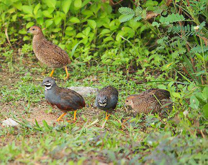 Bird, Nature, Wildlife, Animal, Feather, Outdoors, Wild