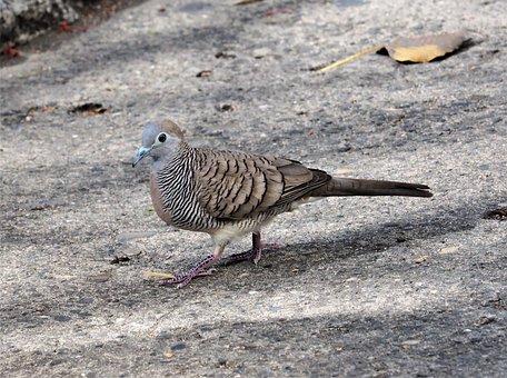 Nature, Bird, Wildlife, Animal, Outdoors, Wild, Pigeon