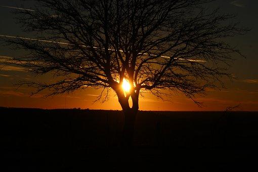 Sunset, Dawn, Dusk, Evening, Tree, Silhouette