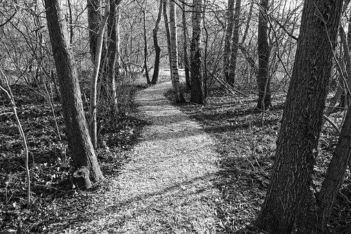Path, Footpath, Forest, Trees, Trunks, Slender