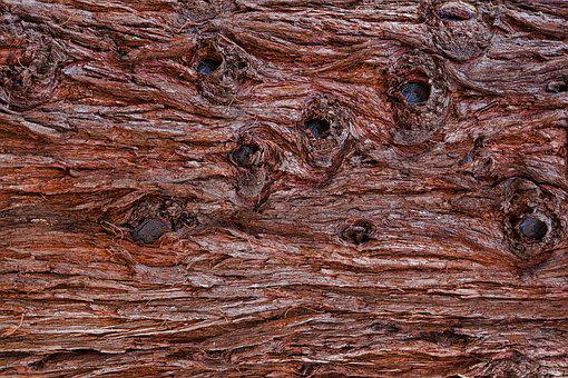 Bark, Tree Bark, Pattern, Wood, Structure, Brown