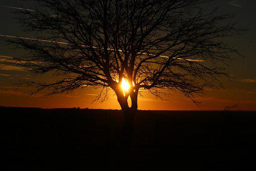 Sunset, Dawn, Dusk, Evening, Tree, Silhouette