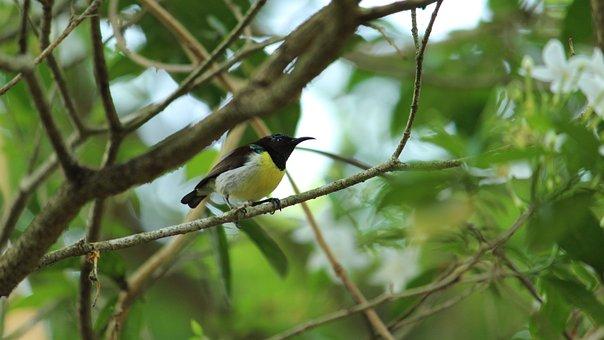 Bird, Nature, Wildlife, Tree, Outdoors, Little, Wood