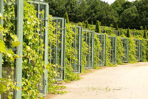 Climber, Fence, Plant, Nature, Vineyard