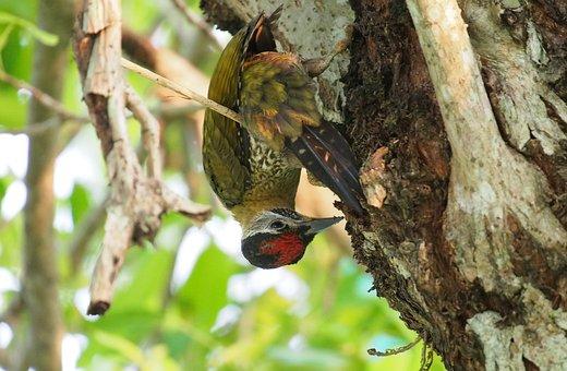 Nature, Tree, Wildlife, Bird, Animal, Wood, Wild
