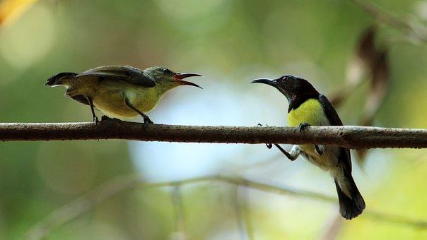 Bird, Wildlife, Animal, Nature, Wing, Wild, Beak