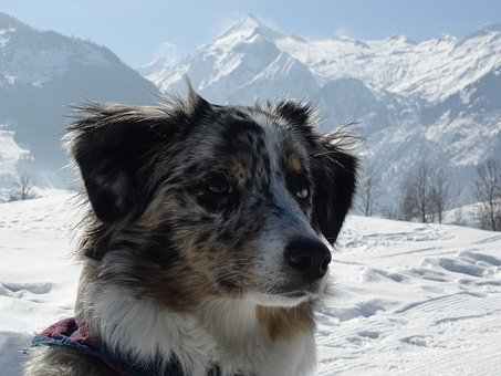 Snow, Winter, Cold, Nature, Mountain, Frozen, Dog