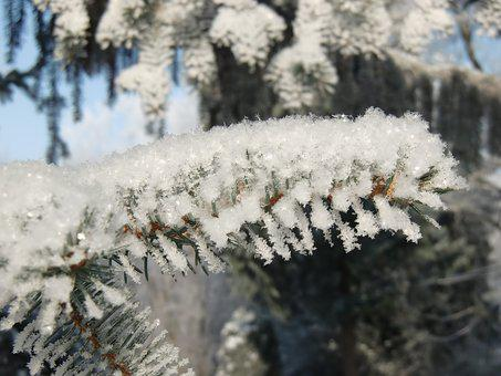 Snow, Frost, Branch, Winter, Crystal