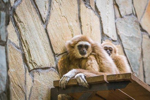 Monkey, Mammals, Wood, Animals, Thoughtfulness, Sadness