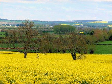 Field, Nature, Agriculture, Landscape, Farm, Cotswolds