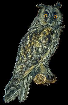Owl, Long Eared Owl, Scops-owl, Bird, Bird Of Prey