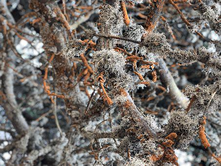 Nature, Tree, Dry, Season, Lichen, Close
