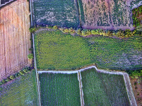Aerial, Fields, Cultivation, Crops, Nature, Flora