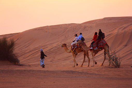 Camel, Desert, People, Sand, Mammal, Sunset, Dawn
