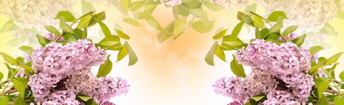 Lilac Flower, Flora, Nature, Leaf, Desktop, Floral