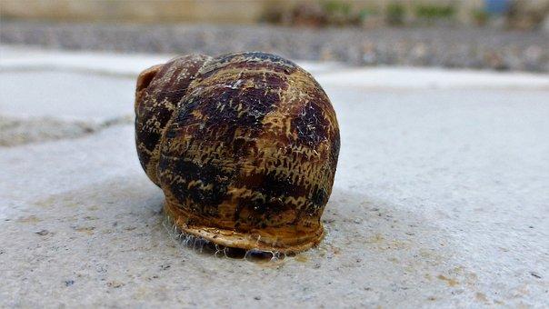Animal, Snail, Shell, Drool