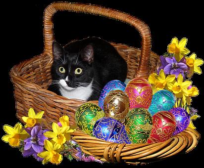 Easter, Eggs, Cat In Basket