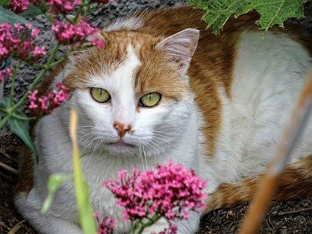 Kitten, Portrait, Fur, Eye, Grass, Fluffy, Pet, Flowers