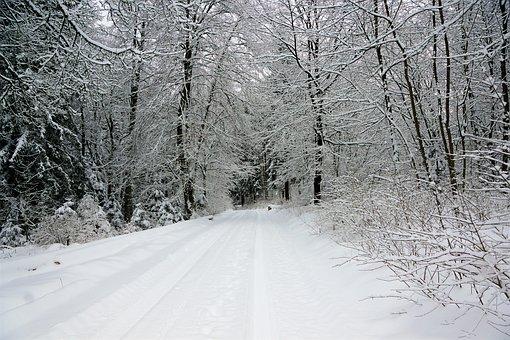Winter, Snow, Cold, Frost, Frozen, Wood, Season, Tree
