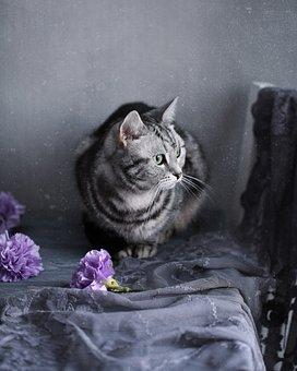 Cat, Kitten, Mammals, Cute, Portrait, Pet, Animals