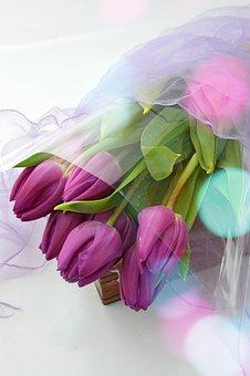 Flower, Plant, Beautiful, Nature, Floral, Petal
