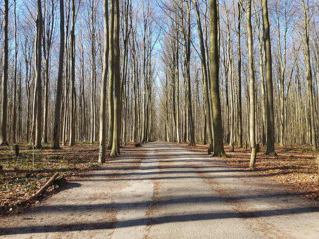 Wood, Tree, Nature, Guidance, Landscape, Belgium