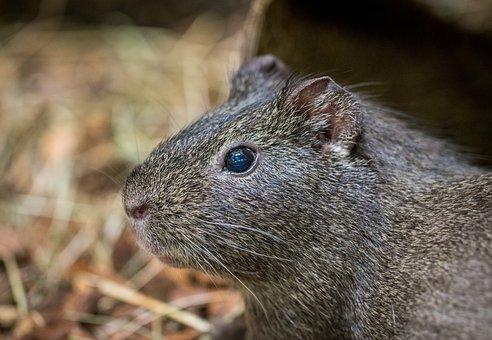 Nature, Rodent, Living Nature, Mammals