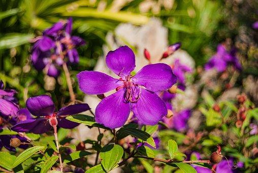 Flowers, Purple, Flower, Nature, Refreshing