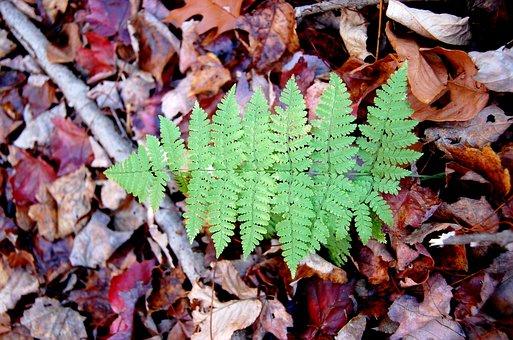 Leaf, Natural, Seasonal, Environment, Plant, Outdoors