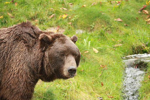Nature, Mammal, Grass, Animal World, Animal, Park, Wild