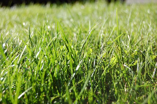 Grass, Cultivation, Field, Pasture