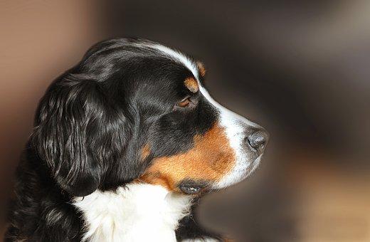 Mammal, Cute, Dog, Animal, Portrait, Profile, Pet