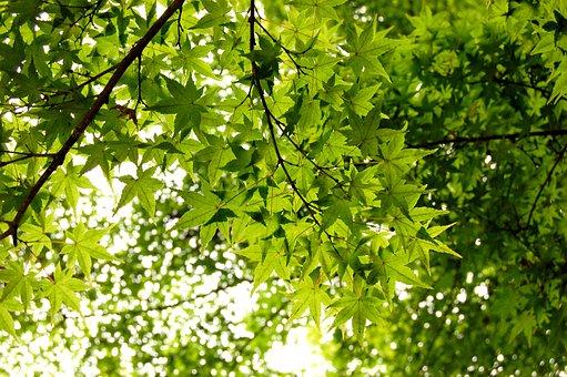 Leaf, Cultivation, Wood, Natural, Plant