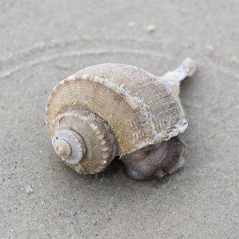 Sea, Shell, Shellfish, Snail, Gastropod, Spiral, Conch