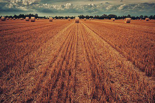 Field, Harvest, Wheat, Straw, Straw Bales, Autumn