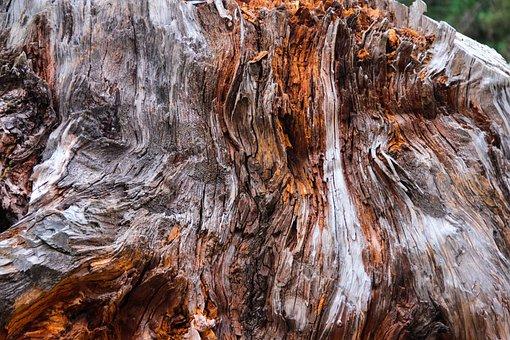 Nature, Tree, Wood-fibre Boards, Texture