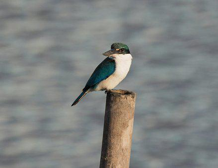 Bird, Wildlife, Nature, Animal, Wild, Outdoors, River
