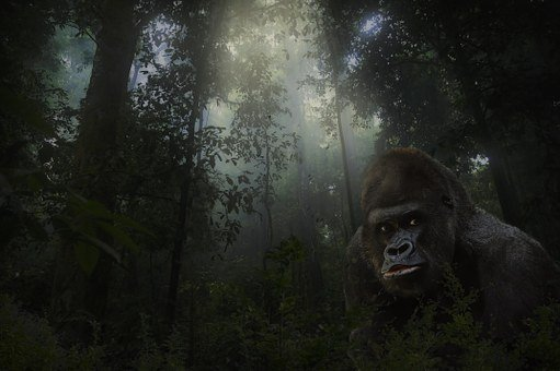 Gorilla, Silver Back, Animal, Mammal, Wildlife