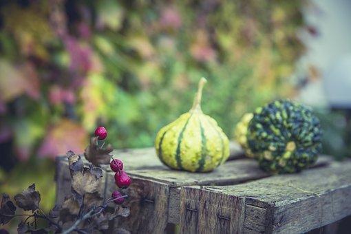 Gourd, Pumpkin, Autumn, Orange, Thanksgiving
