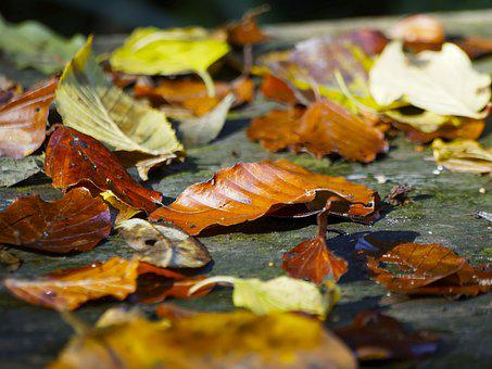 Leaves, Carpet Of Leaves, Red Leaf, Autumn Leaves