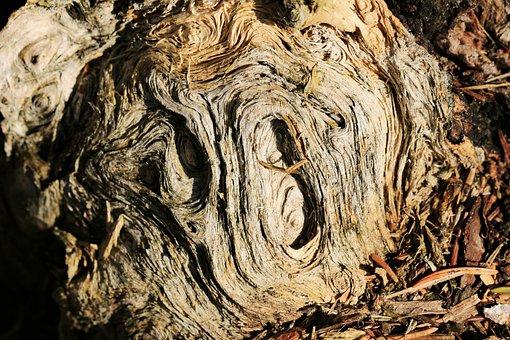 Root, Braid, Grain, Plant, Nature, Morsch, Old
