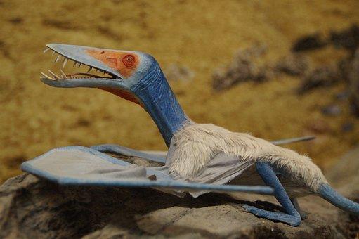 Pterosaur, Prehistoric Times, Dinosaur, Fly, Glide