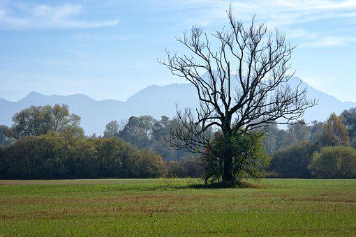 Autumn, Tree, Individually, Meadow, Withers, Dry