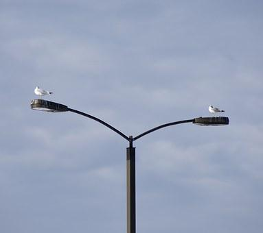 Landing, Seagull, Pole, Resting Spot, Home, On Top